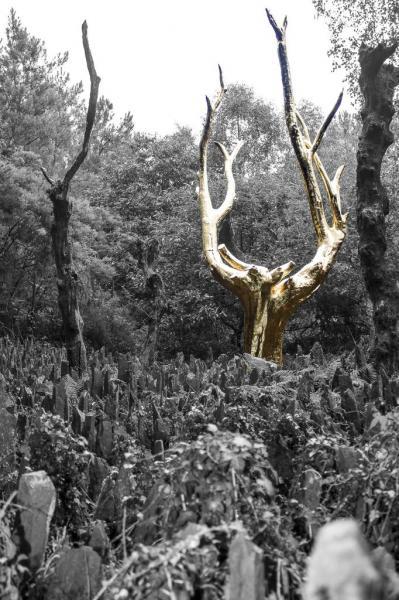 L'Arbre d'or, le val sans retour, Brocéliande