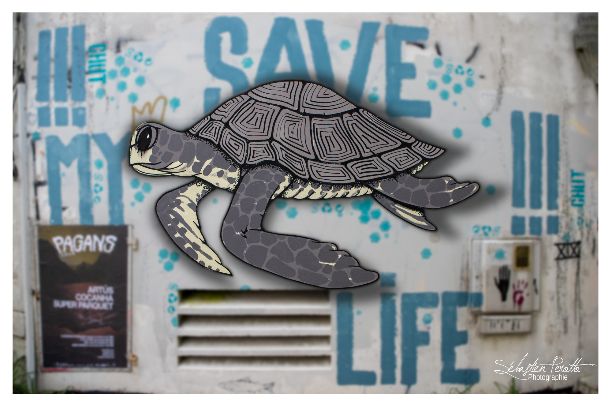 The-turtle-by-CHUT